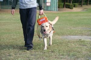 盲導犬と出会ったら
